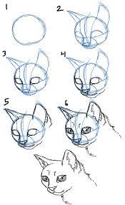 pictures of cats to draw pictures and drawings