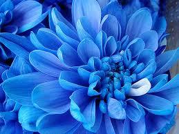 blue flower blue flower by strofant on deviantart