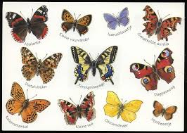 butterflies pictures and names butterfly