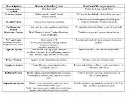 Human Anatomy And Body Systems Human Anatomy