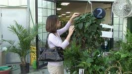 how to select an indoor plant video by videojug fawesome tv