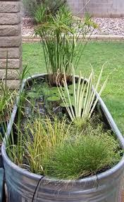 Blue Ribbon Landscaping by Aquatic Plant Sources Martha Stewart Gardening Garden Water