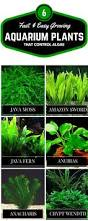 Live Plants In Community Aquariums by 6 Of The Best Ways To Control Algae In A Fish Tank Guide Fast