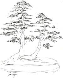 the art of bonsai project feature gallery a tribute to john