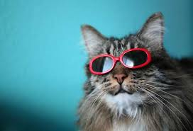 does your cat prefer sun or shade in weather catster