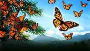 butterfly meaning symbolism thrive on spiritual magazine