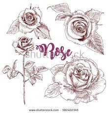 rose sketch stock images royalty free images u0026 vectors shutterstock