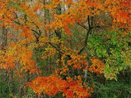 thanksgiving themed wallpaper cute autumn free desktop wallpaper wallpapersafari
