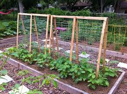 Wood Trellis Plans by Best 25 Cucumber Trellis Ideas Only On Pinterest Permaculture