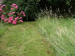 Tall Grass Landscaping by April 2014 Lawn Care Tips Mower Sourcelawn Care Tips Mower