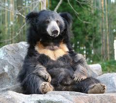 sloth bears lookin dumb harold was feeling the effects of