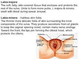 hairless pubis gross anatomy of male female external genitalia mbbs yr ii