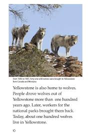yellowstone a place of wild wonders