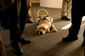 who cleans up after seeing eye dogs mental floss