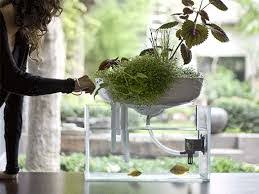 4 innovative aquariums for interior design agnes moser pulse