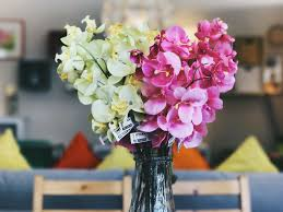 free images blossom spring yellow pink flora hydrangea