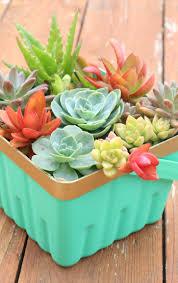 berry basket succulent planter