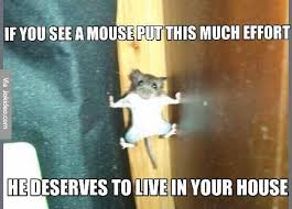 Mouse Memes - if you see a mouse like this meme