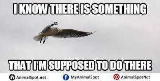 bird meme different types of funny animal memes pinterest bird