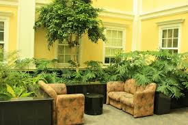 decorative indoor plants living room green plants in glass wall indoor small designs with