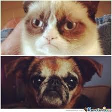 Grumpy Dog Meme - grumpy dog by gnralex96 meme center