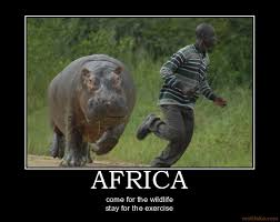 Funny African Memes - best ever funniest wildlife photo memes of 2016 quotations and