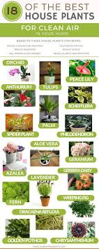 benefits of houseplants 18 of the best indoor house plants to help purify the air detox