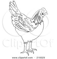 111 coloring pages drawings chickens images