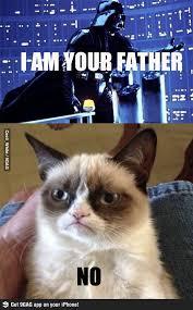 Star Wars Cat Meme - 225 best cats star wars images on pinterest starwars star