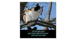 Make A Meme Poster - up the tree quiet cat meme haiku poster zazzle com