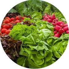 raw food ingredients raw forager