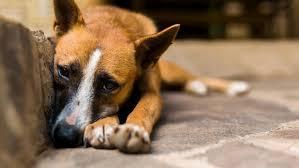 dog euthanasia dog food withdrawn concerns about euthanasia necn