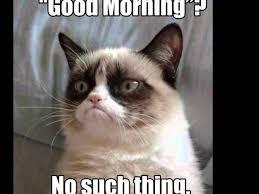 Angry Cat Meme No - austin com angry cat meme no 02