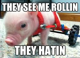 Funny Pig Memes - riding dirty pig memes quickmeme