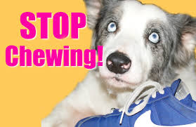picking easy items for how stop biting nails how to teach your puppy or dog to stop chewing youtube