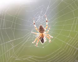 afraid of spiders try sleeping on it psychology today