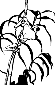 tree frog drawing clipart panda free clipart images