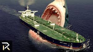 biggest megalodon shark the largest shark in the world megalodon youtube