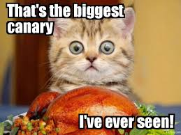 thanksgiving lolcat by fluidgirl82 on deviantart