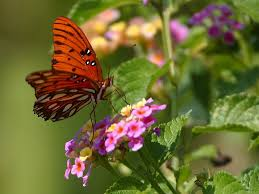 free stock photo of butterfly 4 insects