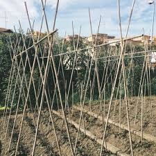 build your own damn tomato trellis u2014 tootie u0026 dotes