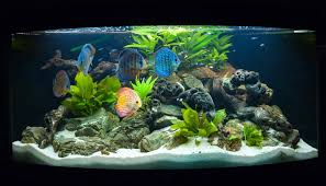 tips to choose ornamental fish for your aquarium