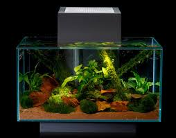 Fluval Edge Aquascape Aquatic Eden Aquascaping Aquarium Blog