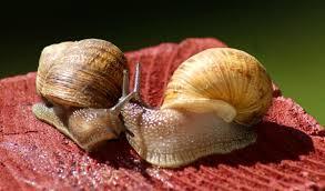 cool wet year has snails munching utah gardens deseret news