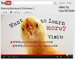 Can I Raise Chickens In My Backyard Thecitychicken Motivationalarticles