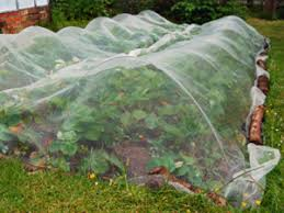 tips for preparing your vegetable garden this summer cbs dallas