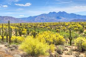 Arizona travel pirates images Fly nonstop to phoenix from just 70 round trip jpg