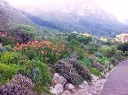 Slo Botanical Garden by Fynbos Gardens In Cape Town Google Search Gardening