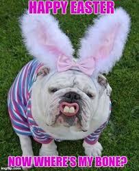 Easter Funny Memes - dog meme funny dog memes easter dog meme dog blog