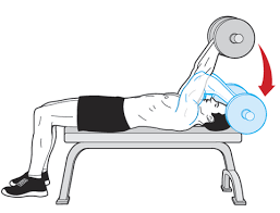 Flat Bench Dumbell The 8 Best Arm Exercises You Can Do